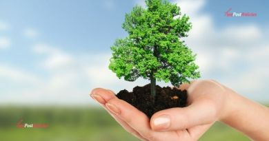 Top 9 Shade Trees With Good Growth
