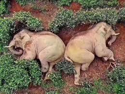 Photo of بعد شربهم 30 كيلوغراما من النبيذ.. 14 فيلا في حالة سكر تام
