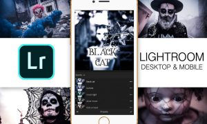 Lightroom Mobile – Black Cat 2939808