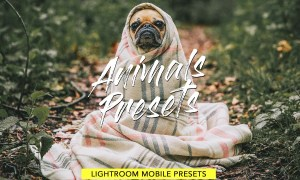 Animals Lightroom Presets Bundle 3605043