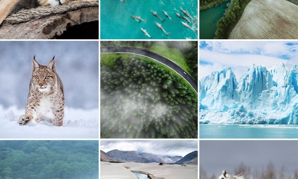Vibrant Nature LUTs for Photo & Video