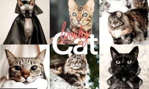 Lightroom Preset-Lovely Cat Theme 4973248