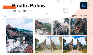 Pacific Palms - Lightroom Presets 5239967