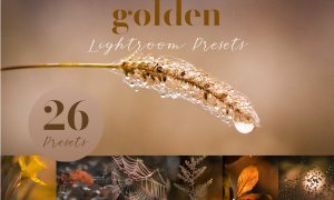 Golden Lightroom Presets 5805936