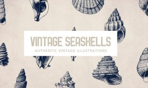 135 Seashell Illustration Collection C2X8CJ