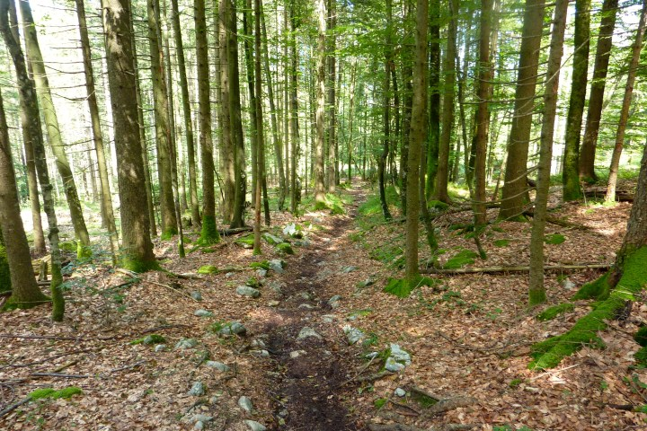 Flow pur im Staffel-Trail