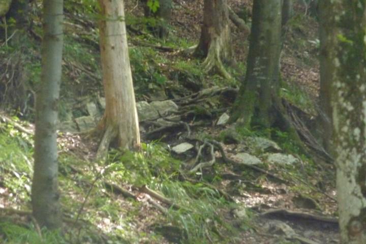 Schlüsselstelle im Zwiesel-Trail
