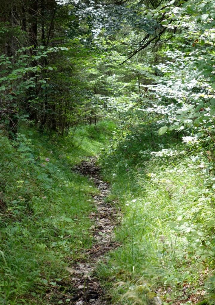 und führt nach überqueren der Forststrasse  bis runter ins Tal, wo man locker zurück nach Ochsenhütte pedaliert