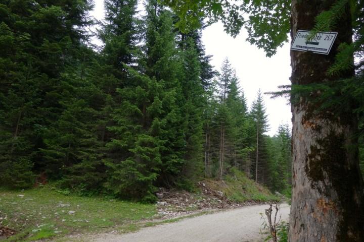 Nachdem man vom Parkplatz in Ochsenhütte 400hm gekurbelt hat,  wendet man sich dem Wegweiser entsprechend nach Westen