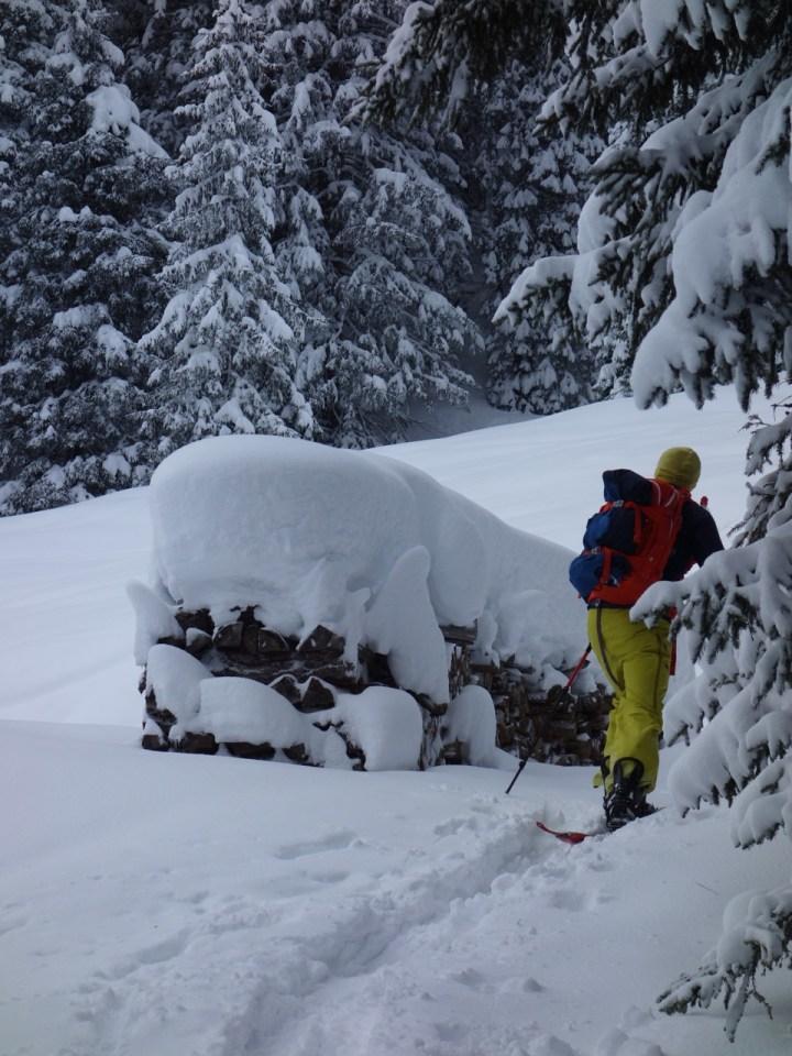 und vorbei an schneebedeckten Holzstößen geht's durch den Wald ...