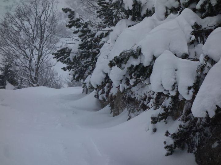 Perfekter Schnee am Herzogstand, ein Winterträumchen...