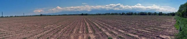 Panorama image of plowed soybean fields with trees in the distance.