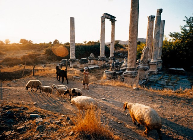 Sheep in foreground, ruins in background.