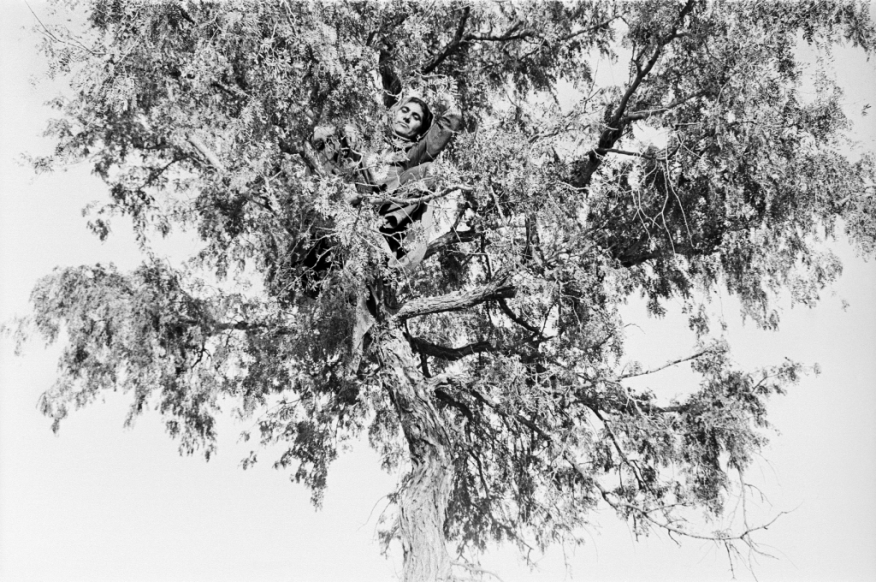 Izmat, a personal friend of Gill's, stares down from a tree. Her gaze challenges the viewer. Izmat, from the series Notes from the Desert; Gauri Gill (b. 1970, India); 1999–2010; gelatin silver print, 61 × 76.2 cm; Purchase—Friends of the Freer and Sackler Galleries Arthur M. Sackler Gallery, S2014.16