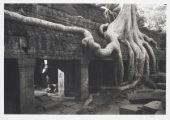 Black and white photo: stone temple at Angkor with roots of a strangler fig crawling over the suface.