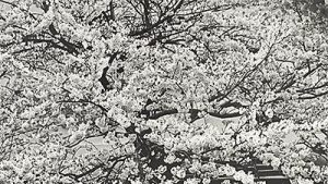 detail, image from Sense of Place: Landscape Photographs from Asia