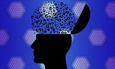 brain questions
