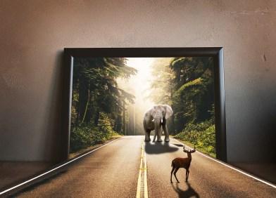 elephant & dear meeting through wall frames