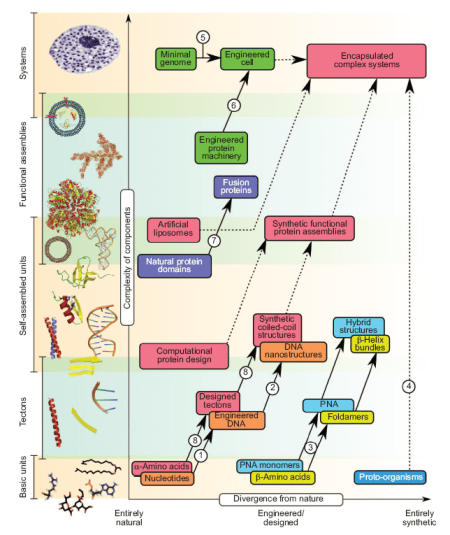 Peptide and Protein Building Blocks for Synthetic Biology - EHC Bromley et al.