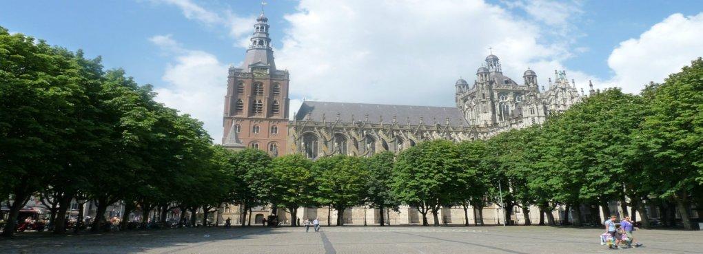 Wietzaden kopen in Noord Brabant