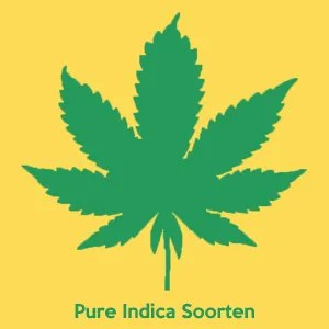 Buy Pure Indica
