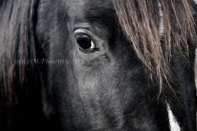 spirit eye print WM