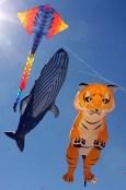 Kite Festival_of_the_Winds_Australia_russavia_wikimedia commons