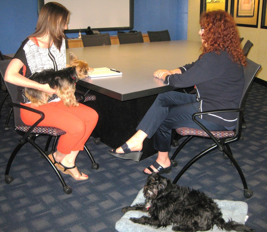 Dog Meeting2