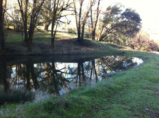 Pond at Reyes Place