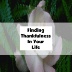 Finding Thankfulness In Your Life