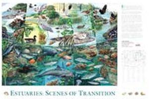 EPA.gov Free Estuaries Scenes of Transition EPA Poster