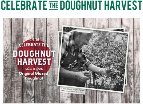 doughnutharvest