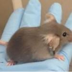[:en]FT-mouse[:]