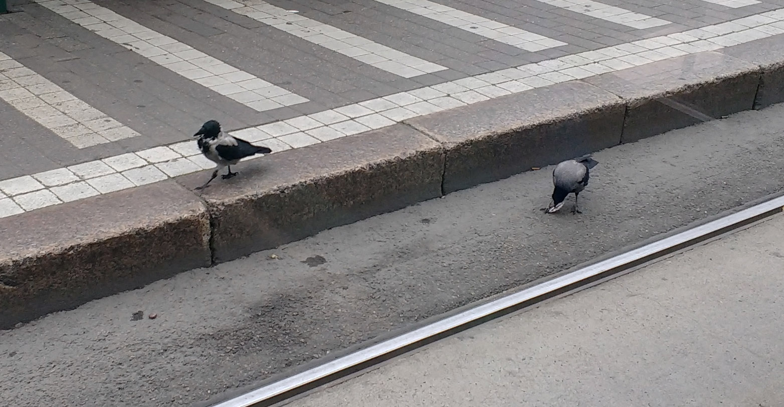 tramcrows1