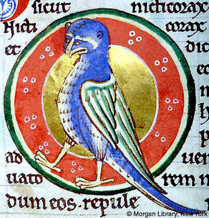 Morgan Library, MS M.81, Folio 62r, The kind of owl called nictocorax, the night-raven.