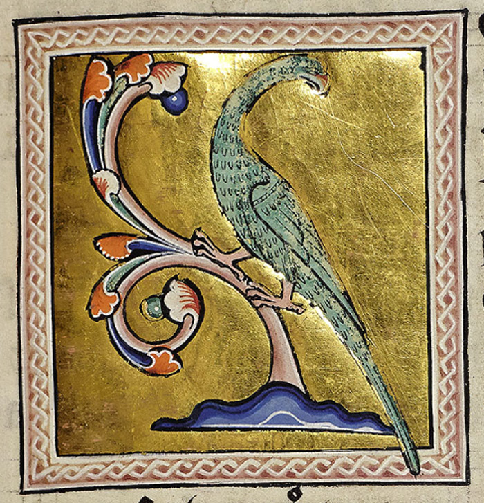 The parrot has a hard beak and a tough skull. The ibis regurgitates snakes' eggs and carrion to feed its young. The parrot is correctly painted in green and red, perched on a branch. The Indian rose-ringed parakeet was the only member of the parrot family known in Europe in the middle ages.