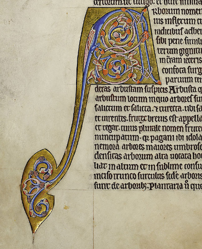 The major initial 'A', type 3, marks the start of the section on trees and plants. The stem of the letter is formed by a sweeping dragon's tail.