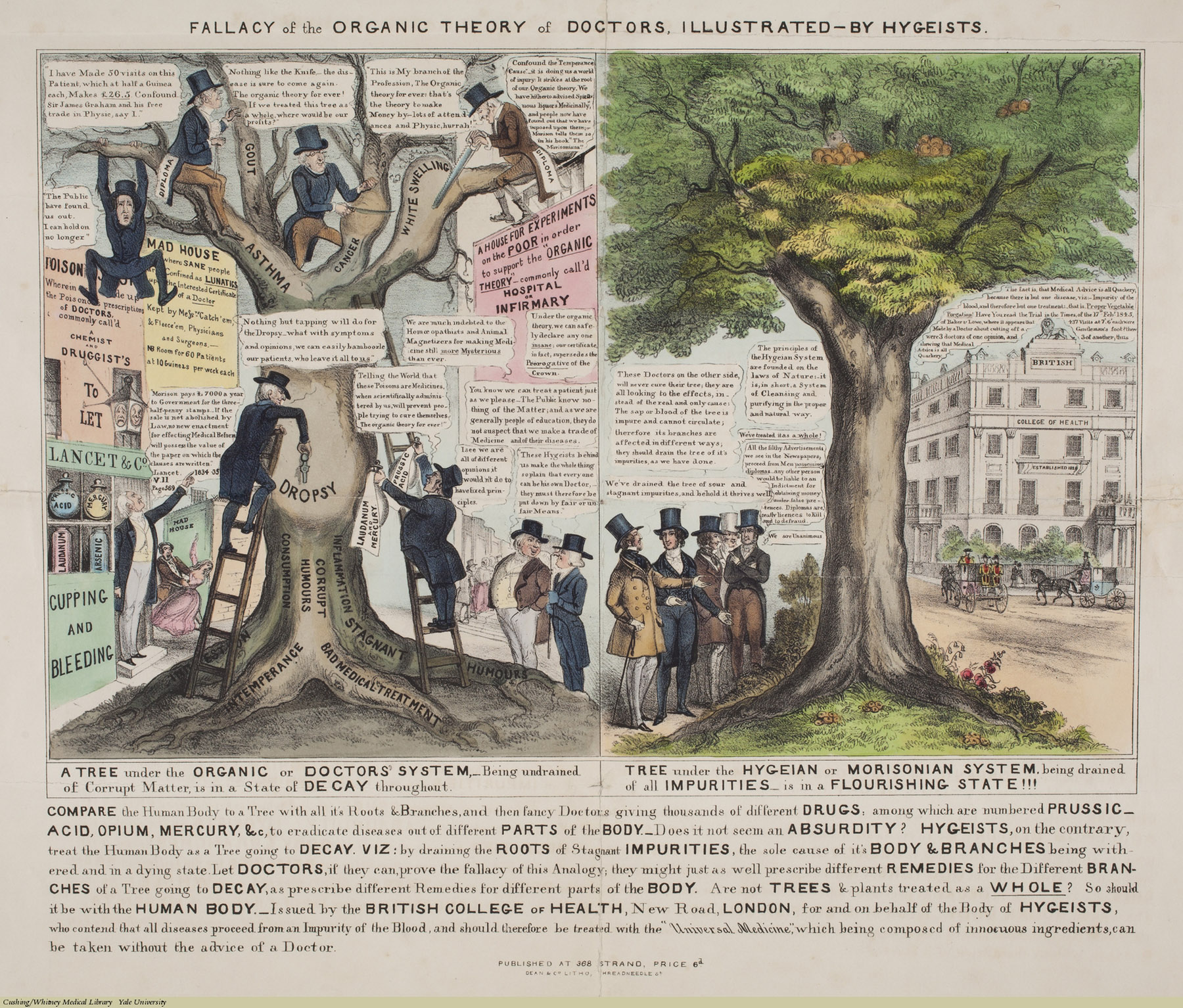 FALLACY of the ORGANIC THEORY of DOCTORS, ILLUSTRATED-BY HYGEISTS. Anonymous, Lithograph coloured. Subject: Proprietary Remedies, James Morison (1770-1840), James Graham, The Lancet, Thomas Wakely, Hygeian System, Universal College of Health, Baker vs. Lowe (1845)