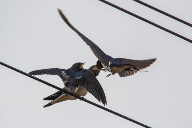 Adult feeding one of the youngsters