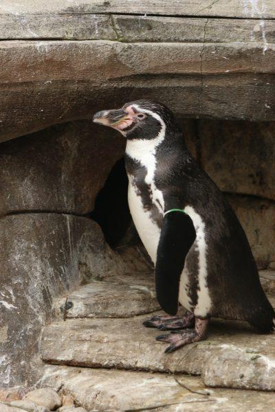 Penguin in cave