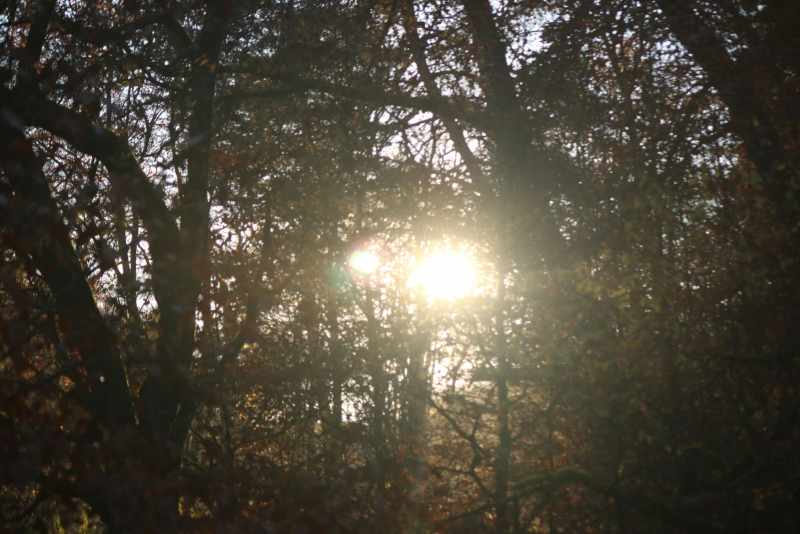 sun between trees