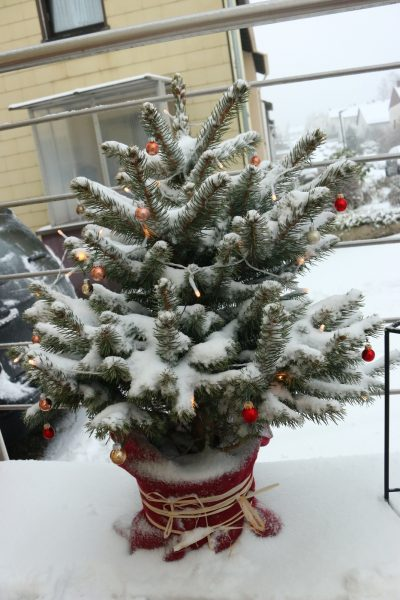 chritsmas tree in snow