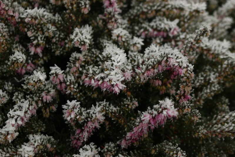 erica flowers