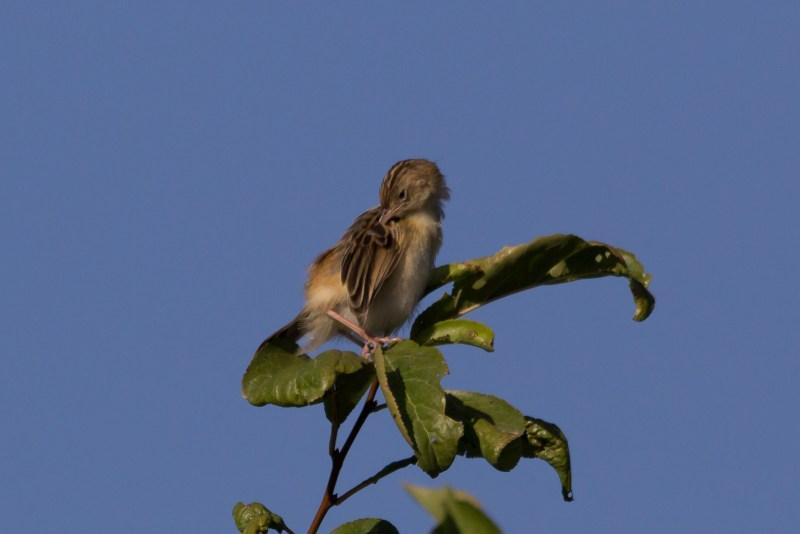 bird on plant