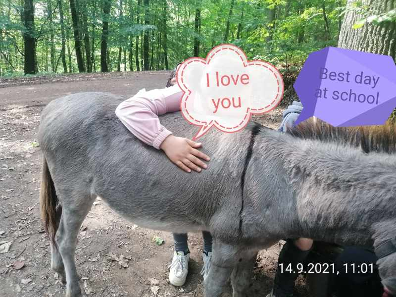 a kid hugging the donkey and resting its face (obscured) on the back of the donkey