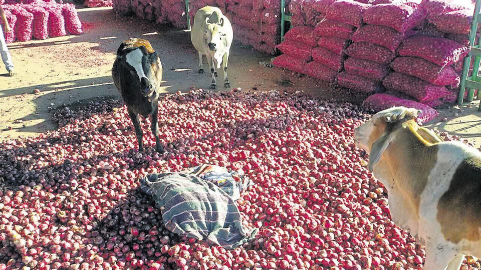 Some distressed farmers threw their onion produce in front of stray cattle at the Neemuch market in December. (Arun Mondhe/Hindustan Times)