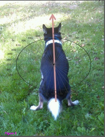 Pooping dog, aligned with magnetic North.