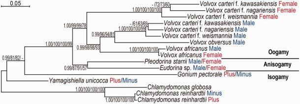 MAT3 phylogeny