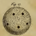 Figure 27 from Baker 1764.