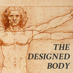 The Designed Body